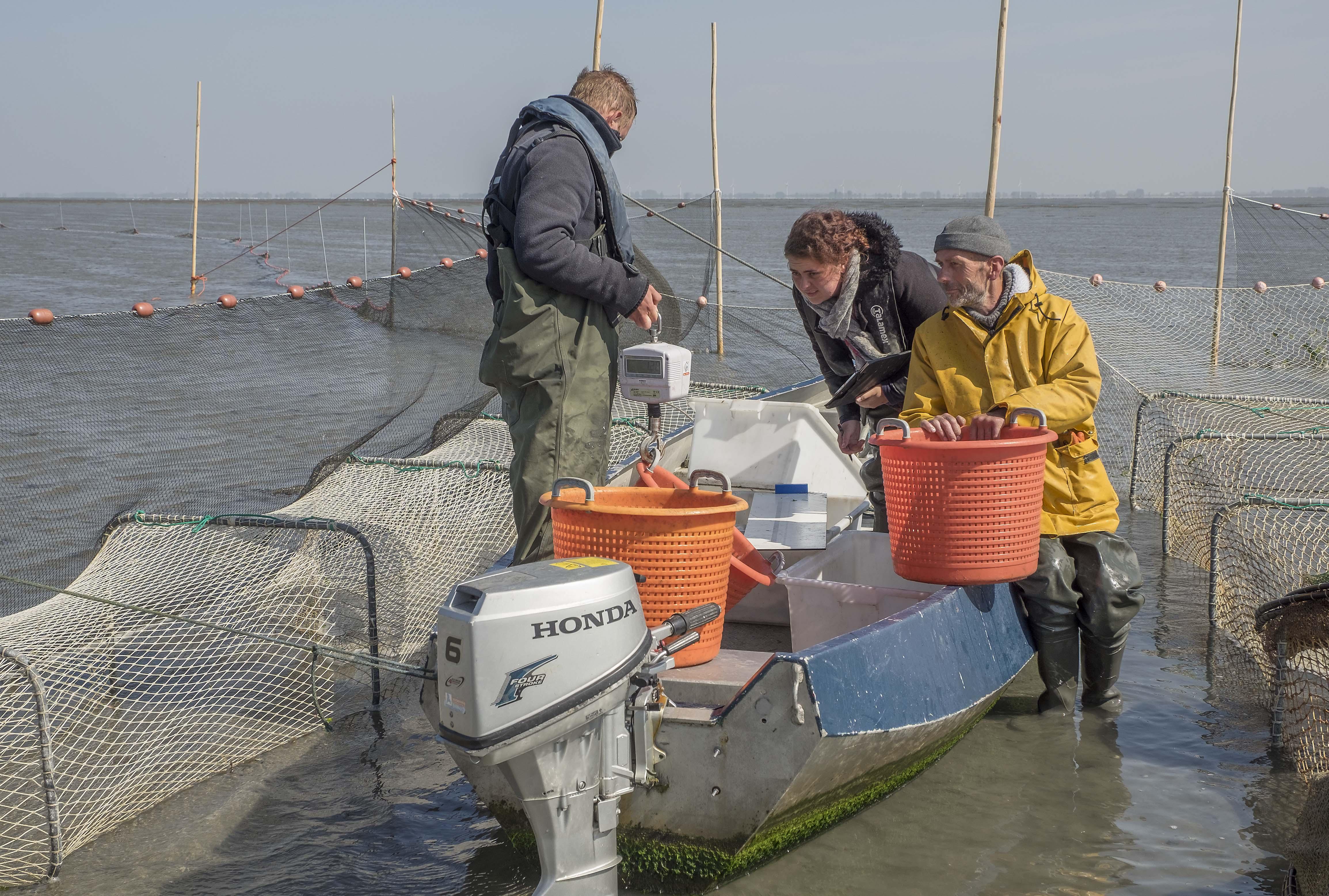 NetVISwerk Bestuurslid Jaap Vegter monitort met Vissers van de Kust de visstanden op Friese Wad