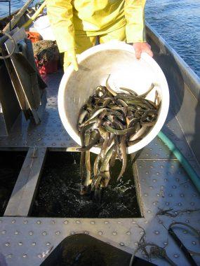 Natuurmonumenten in beroep tegen uitspraak van de Kamer voor de Binnenvisserij over huurovereenkomst beroepsvissers Wieden.