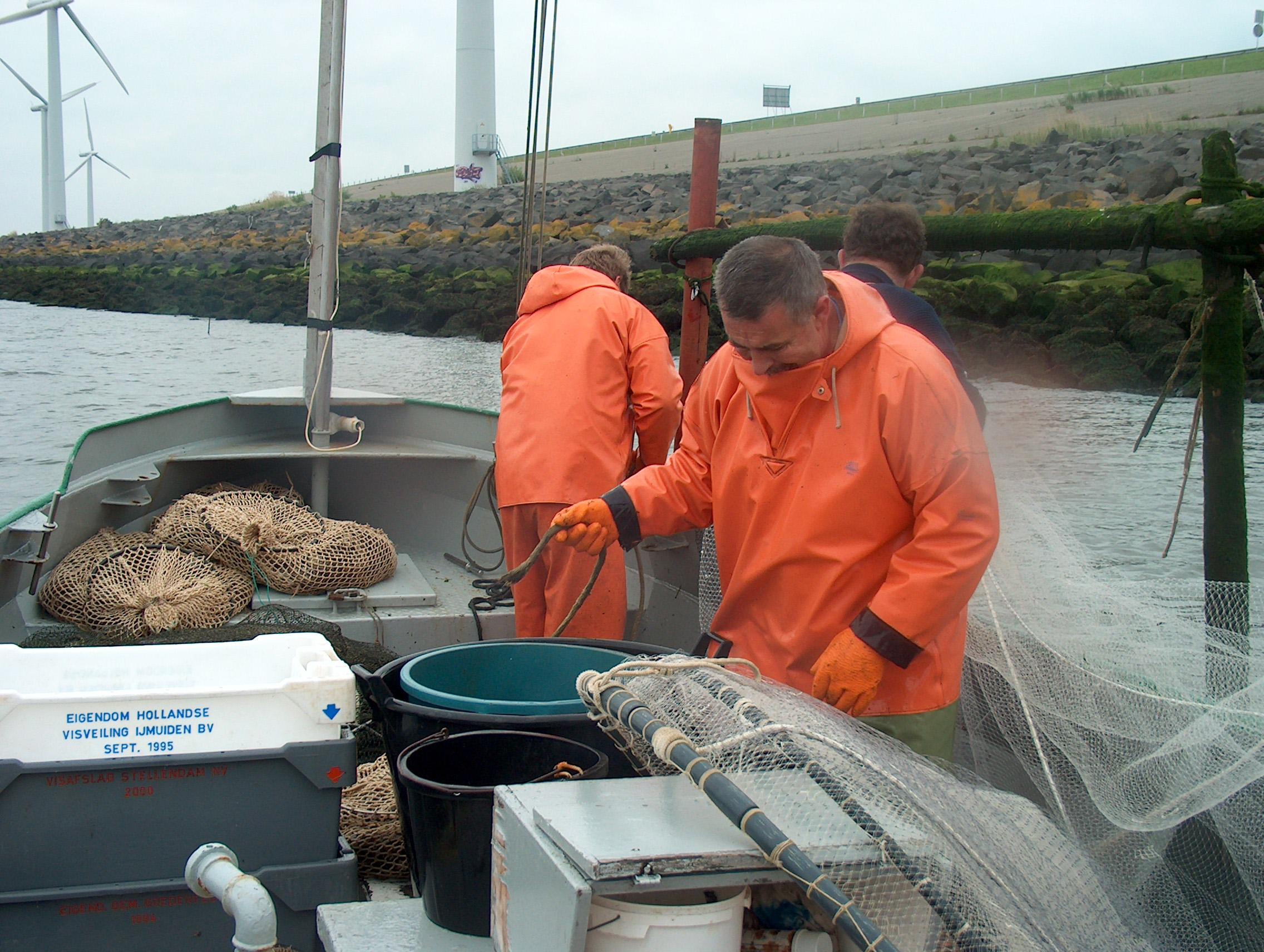NetVISwerk denkt mee over vis en visserij rond Haringvlietdam.