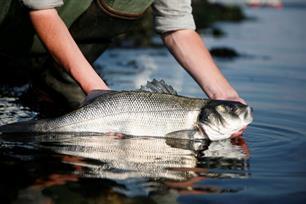Aanlandplicht voor handlijnvissers